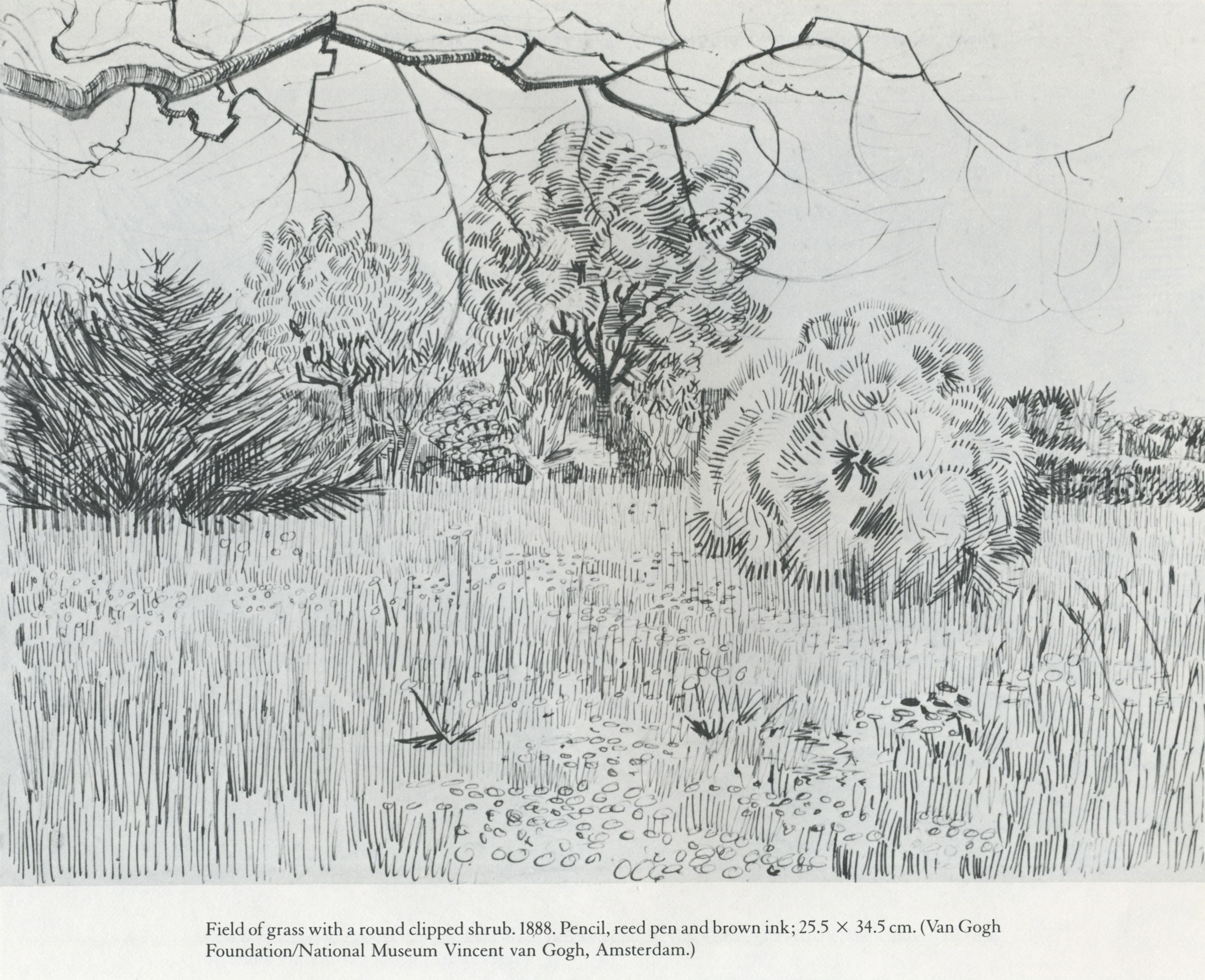 Line Drawing Lessons : Pencil sketches of nature sceneries landscapes