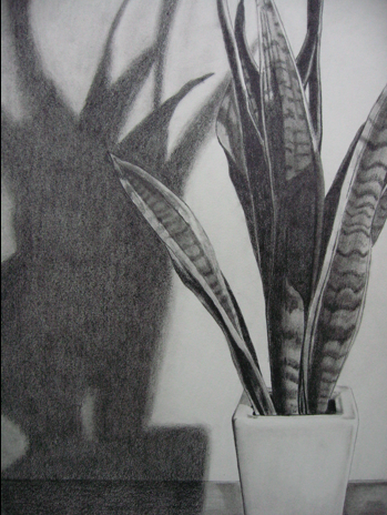 Homework: With pencil, draw a gesture sketch of a whole potted plant ...